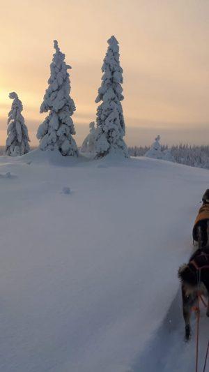 Koiravaljakkoajeluja Ritavaarassa ja Ruskan Laukan tallilla Ruka-Kuusamossa