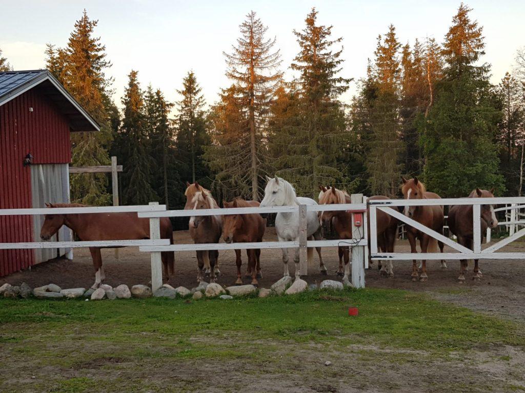 Ruska Laukan tallilla kavereiden kanssa hengailua Ruka-Kuusamossa