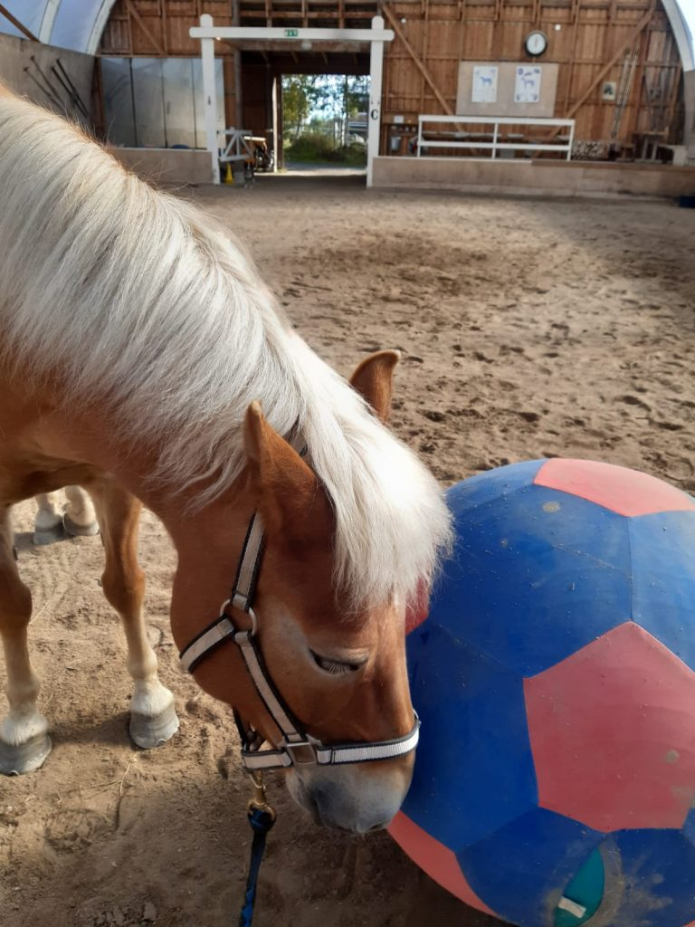 Ruska Laukan tallilla kesäleiriläisten puuhia hevosten kanssa Ruka-Kuusamossa