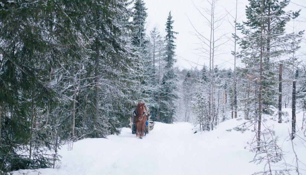 Ruska Laukan tallilla rekiajelua suomenhevosilla Ruka-Kuusamossa
